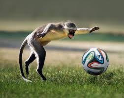 Monkey-playing-ball